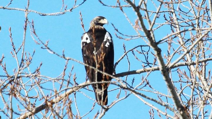 La minería de tierras raras, incompatible con especies amenazadas como el águila imperial y el lince 1