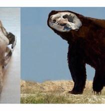 ARGENTINA. Hallan un oso gigante del Pleistoceno, el mayor conocido 4