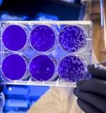 Pandemia COVID-19: lo que sabemos y lo que no. 4