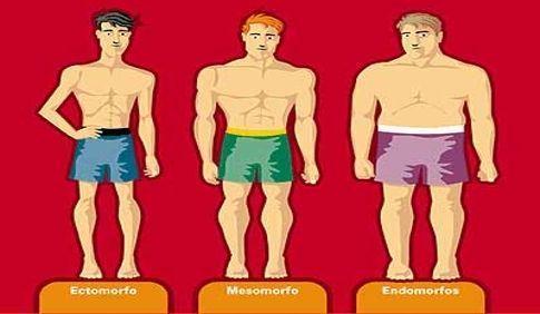Los tipos morfológicos