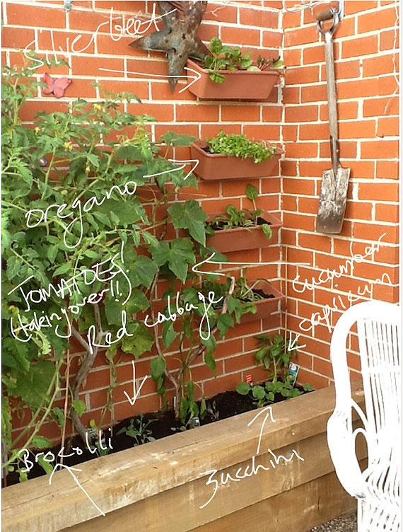 My vertical vegetable garden
