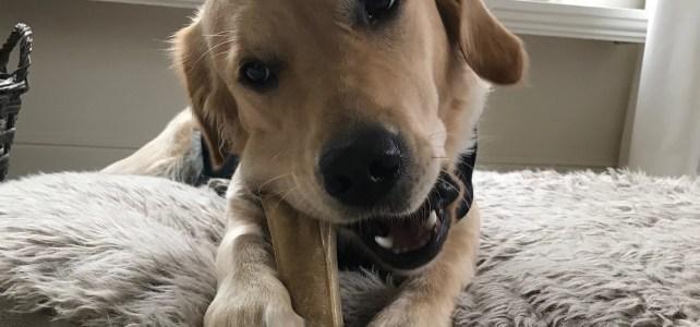 Waarom logopedie en coaching samen met een hond