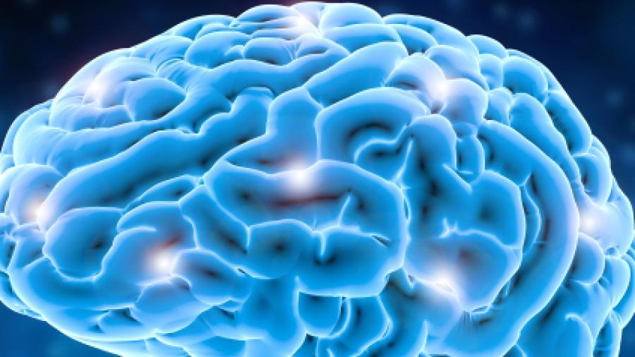جزء في الدماغ يظل ينمو حتى سن الـ36.. وهذه هي وظيفته