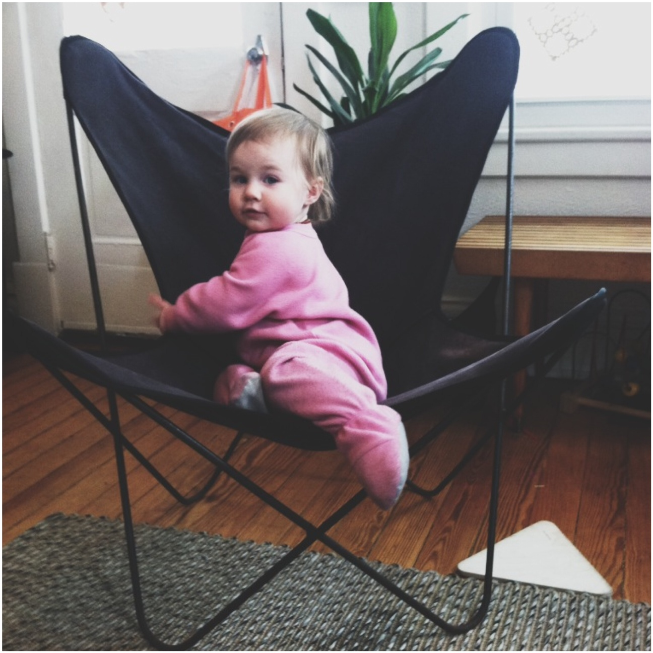 A Denver Home Companion | Butterfly Chairs ...