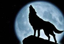 corazon de lobo