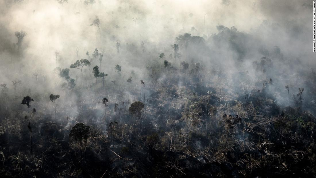 The world lost a football pitch-sized area of tropical forest every six seconds in 2019