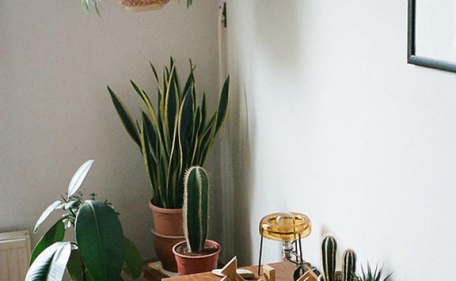 Crushing On Lush Boho Houseplants A Designer At Home