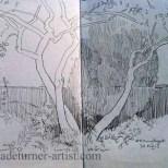 Apple trees in garden pencil sketch