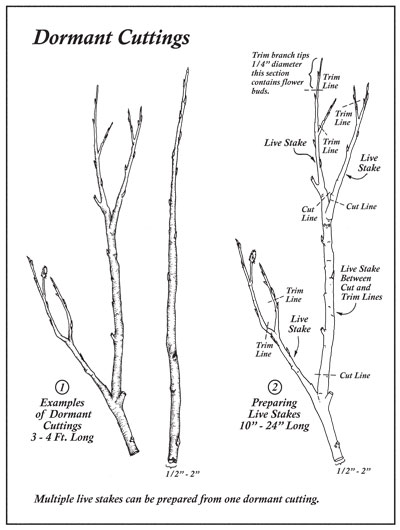 Fish Stream Identification Guidebook