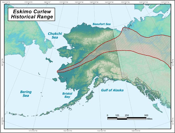 Eskimo Curlew Range Map Alaska Department of Fish and Game