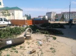copaci taiati 30 iunie 2015 (5)