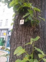 pomi numerotati la Viena (3)