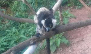 Lemurian Madagascar