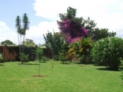 vegetatie Antananarivo Madagascar