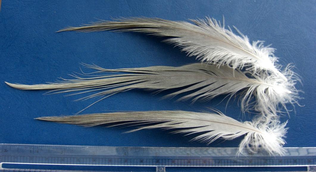 Grey Heron Feathers  Spey Flies