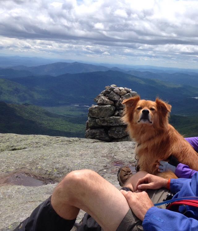 Adirondack Dog Of The Week  Each Week We Choose A Winner