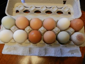 Adirondack Farm Fresh Eggs