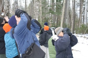 Surveying trees for signs and symptoms of invasive insects.