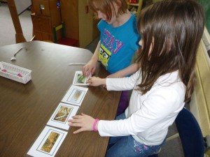 Students arrange emerald ash borer life stage cards in the correct order from egg to larva to pupa to adult.