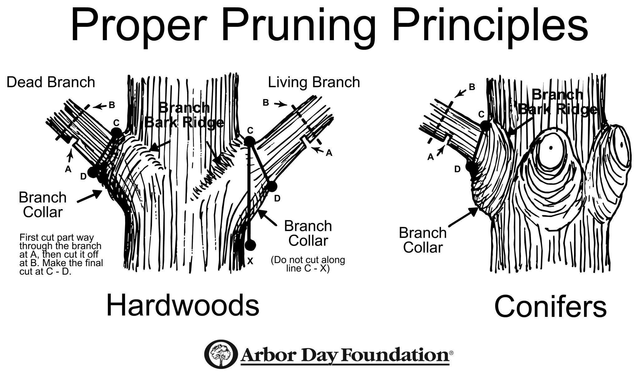 branches branching tree diagram baldor 7 5 hp single phase motor wiring pruning time six weeks before buds open the