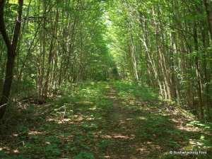 Old logging road south of Slim Pond