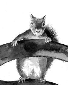 squirrel TOS