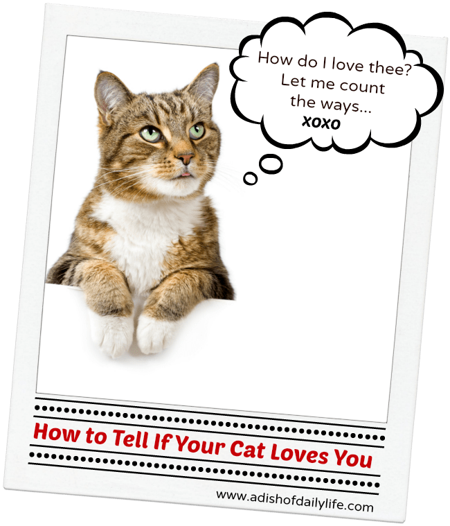 b6548b99aad How to Tell If Your Cat Loves You: Insights Into Your Cat's Behavior ...