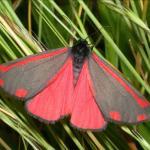 Papillon site