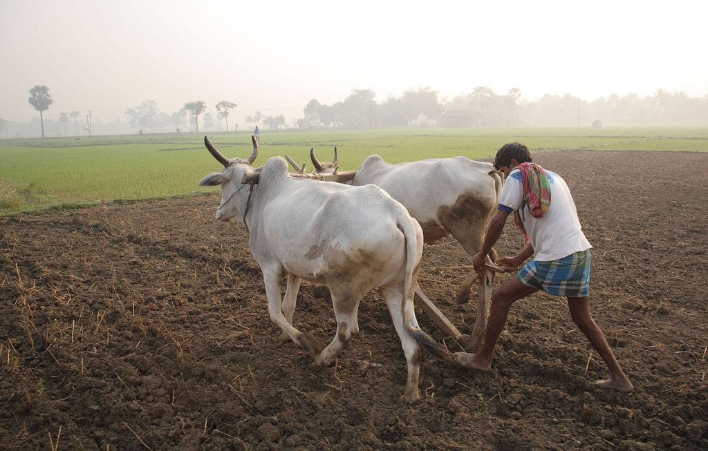 An Indian plowman in West Bengal working in India's largest industry: Agriculture