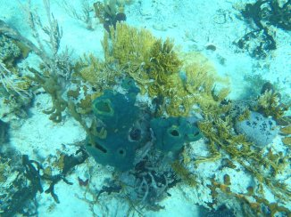 Sponges, staghorn, fan and fern coral
