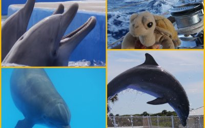 Tilly and the friendly dolphins