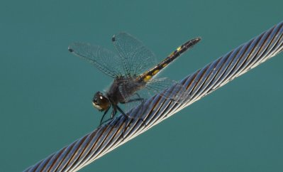 Tilly thinks is damsel fly is beautiful