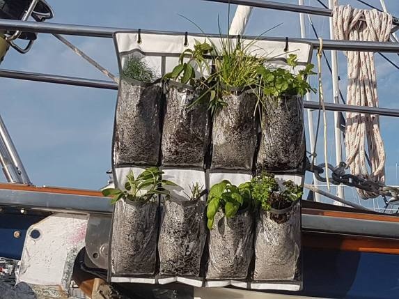 My shoe bag herb garden on bowsprit rail
