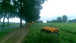 Kalebassen langs de Zevenheuvelenweg