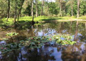 Het Bovenmeer: de kunstmatige bron van de Beek (Foto: Ad lansink)