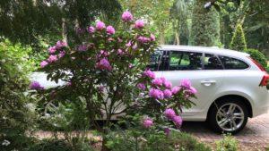 Witte Volvo V60 D6Te bij een paarse laatbloeier