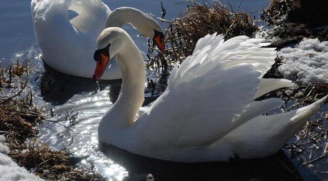 Jégbe zárt hűség – Újabb novella Mester Györgyi tollából