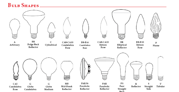 Bulbs Identification Guide