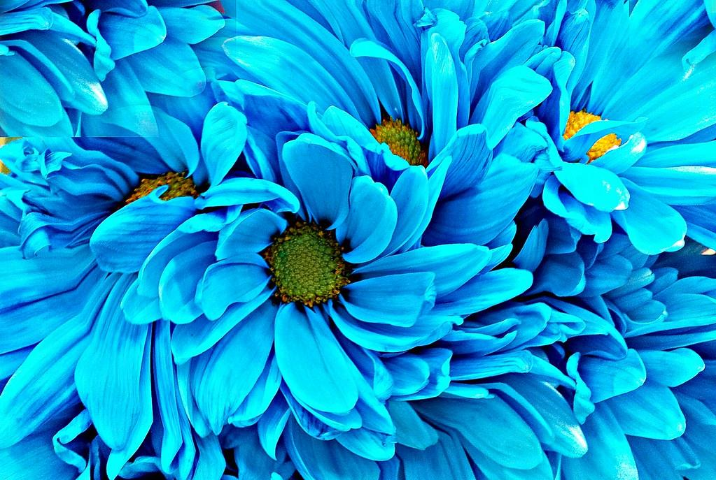 The importance of colour symbolism in floral design