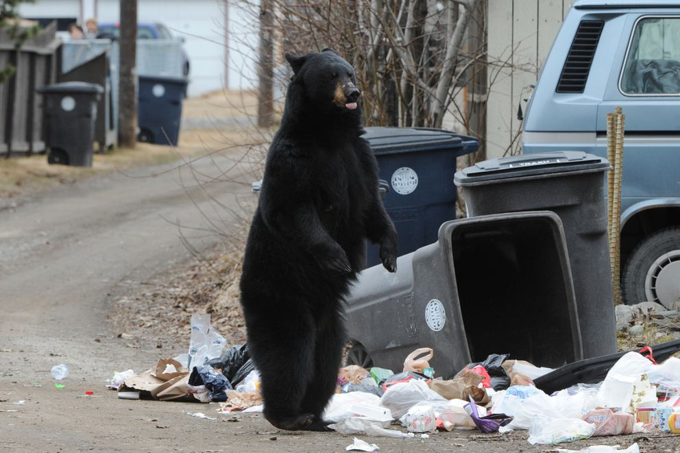 Barely interested Bearresistant trash cans get lukewarm reception in Anchorage  Anchorage