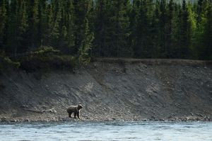 One small step toward repairing Alaska's rigged wildlife management system