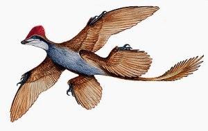 الميكرورابتر جاي Microraptor Gui