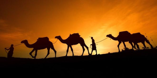 morocco-camels-10-810