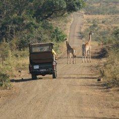 African Safari car
