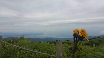 Hakone flower