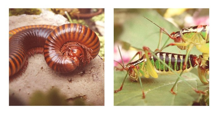 """Campaign Spotlight: HORNBACH and Agency HEIMAT Brings """"Sex Outdoors Again"""" with Biodiversity Ad Featuring Bugs and Slugs"""