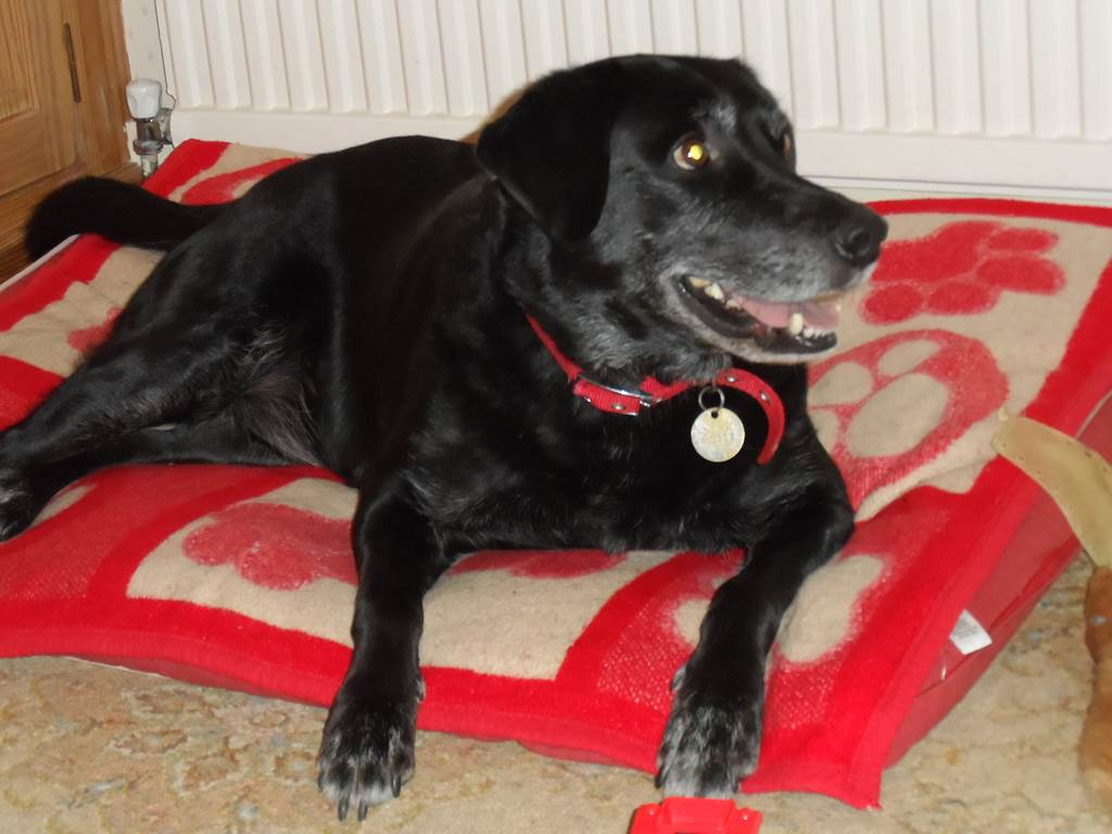 how to stop your dog from jumping up on the sofa leather and fabric corner sofas uk at visitors vicky