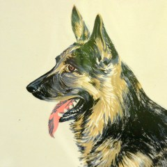 , Collecting Breeds