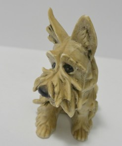 Cacciapuoti dog