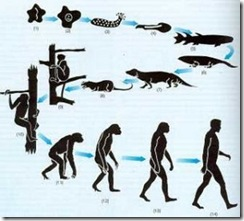 evoluçao